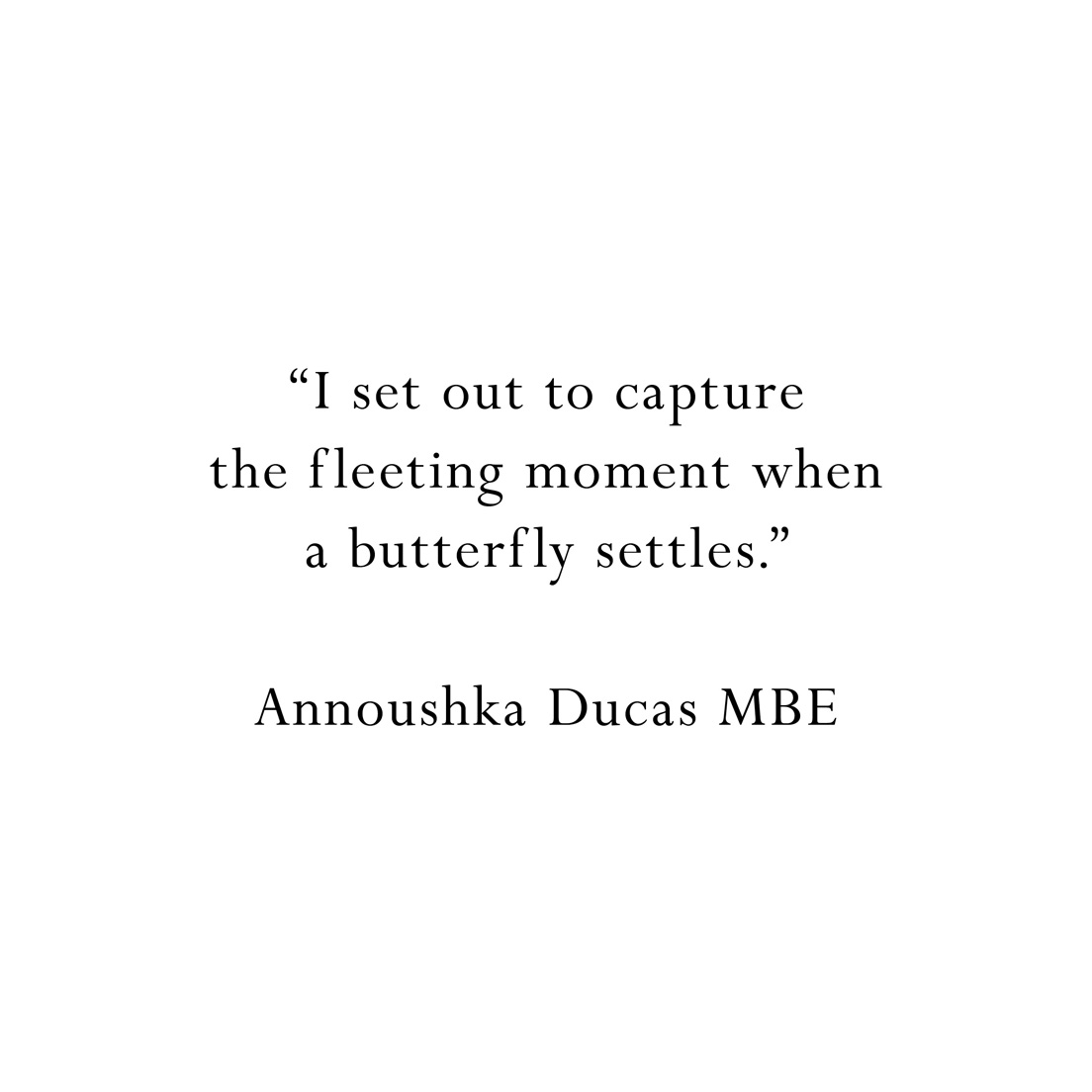 Butterflies Quote